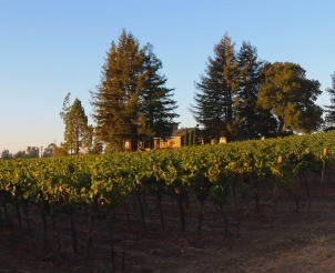Napa Valley Getaway For 6 with Michael at CaMomi Winery