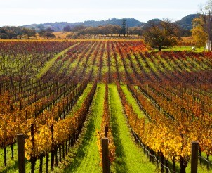 Guided Napa Valley Tour by World Famous Sommelier