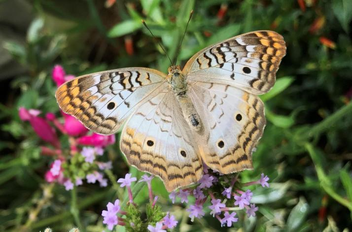 Butterflies and Blooms on Mother's Day: In SF, California