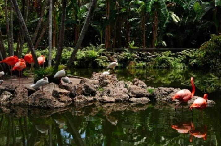 Flamingo Garden's VIP Tour Experience: In Pembroke Pines, Florida